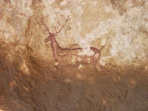 Ciervo de Chimiachas Sierra de Guara