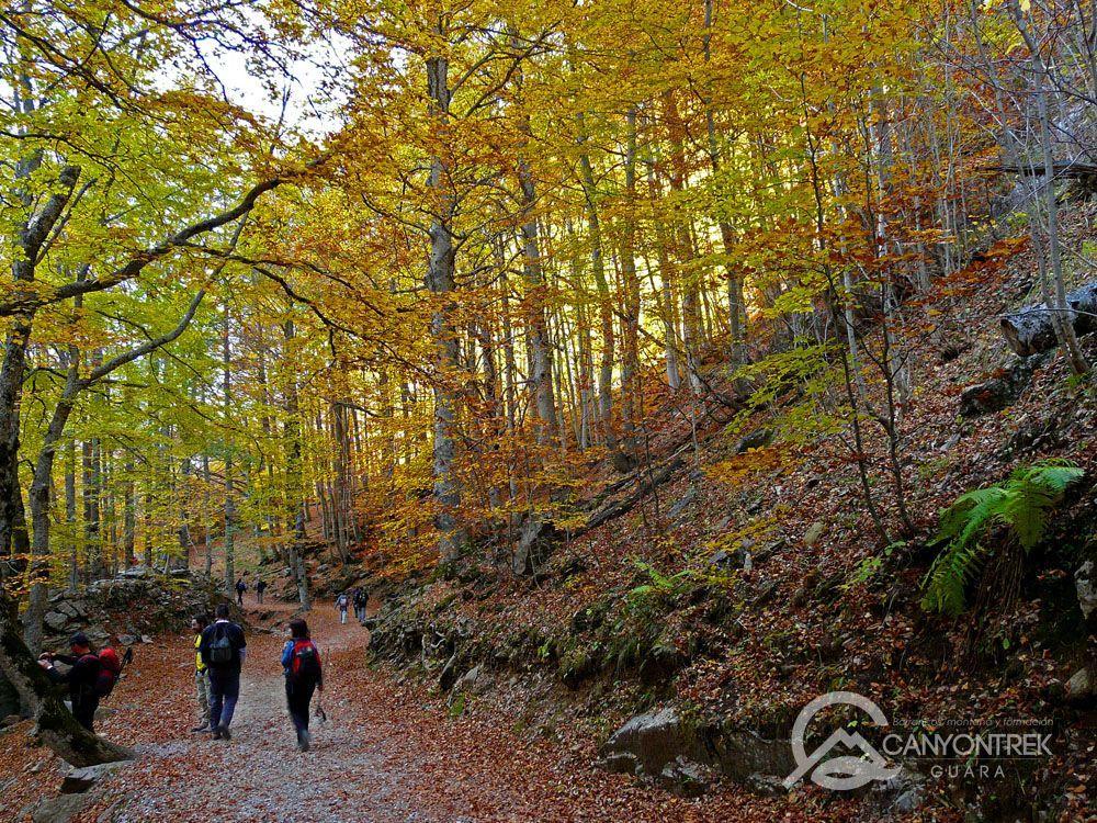 Senderismo bosque de Ordesa en otoño