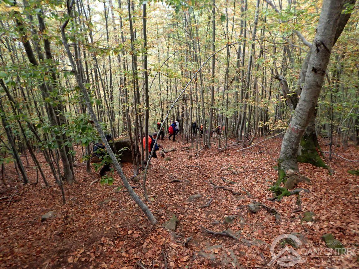 Bajando por el bosque GR11 hacia Pineta